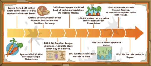 Carrot Chart